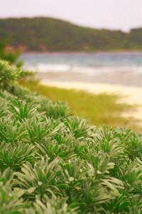Green-Beach0271.jpg